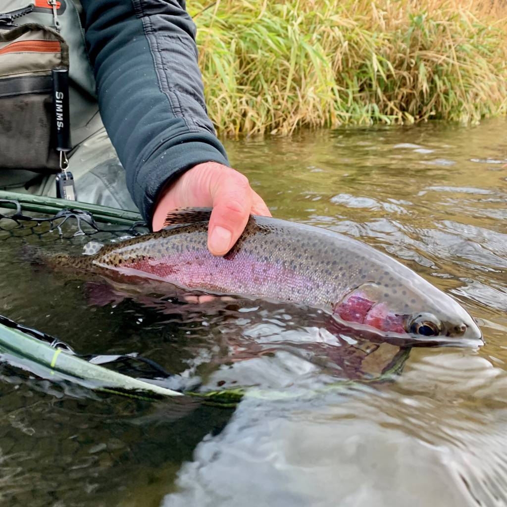 Black Friday Fish A Long Report