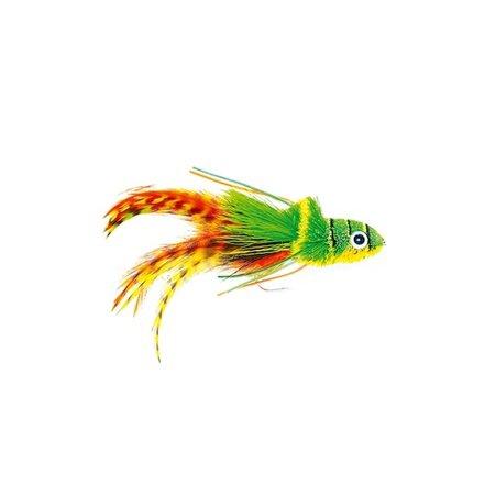 Swimming Frog Orange Belly 2-FM