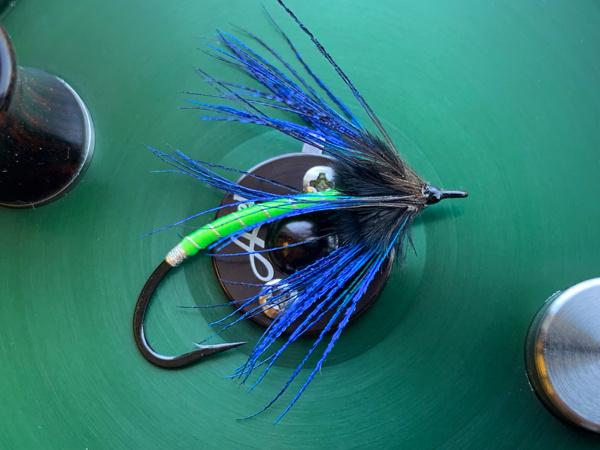 Peacock Spyder