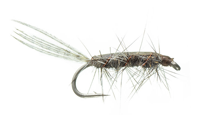 Rickards' Callibaetis Nymph - Grey 12