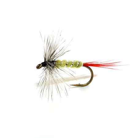 Anchored Outdoors' Gray Hackle Yellow