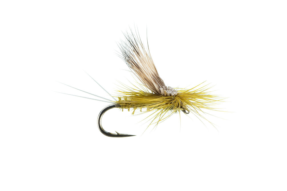 Galloup's Tilt Wing, Olive 16-S