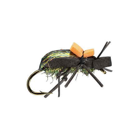 Rio's Ground Beetle