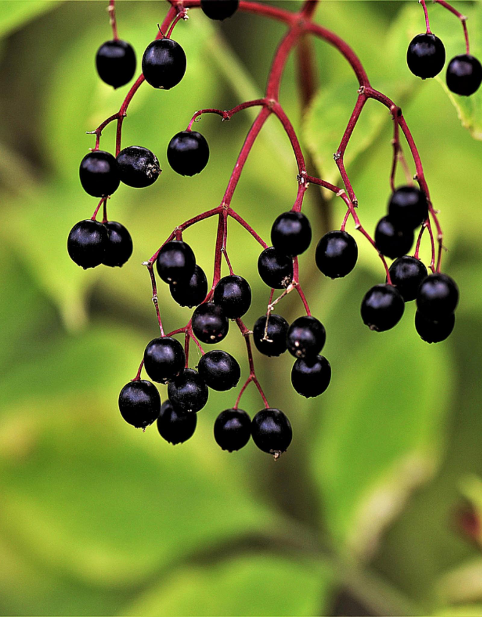 Elderberry Dark Balsamic
