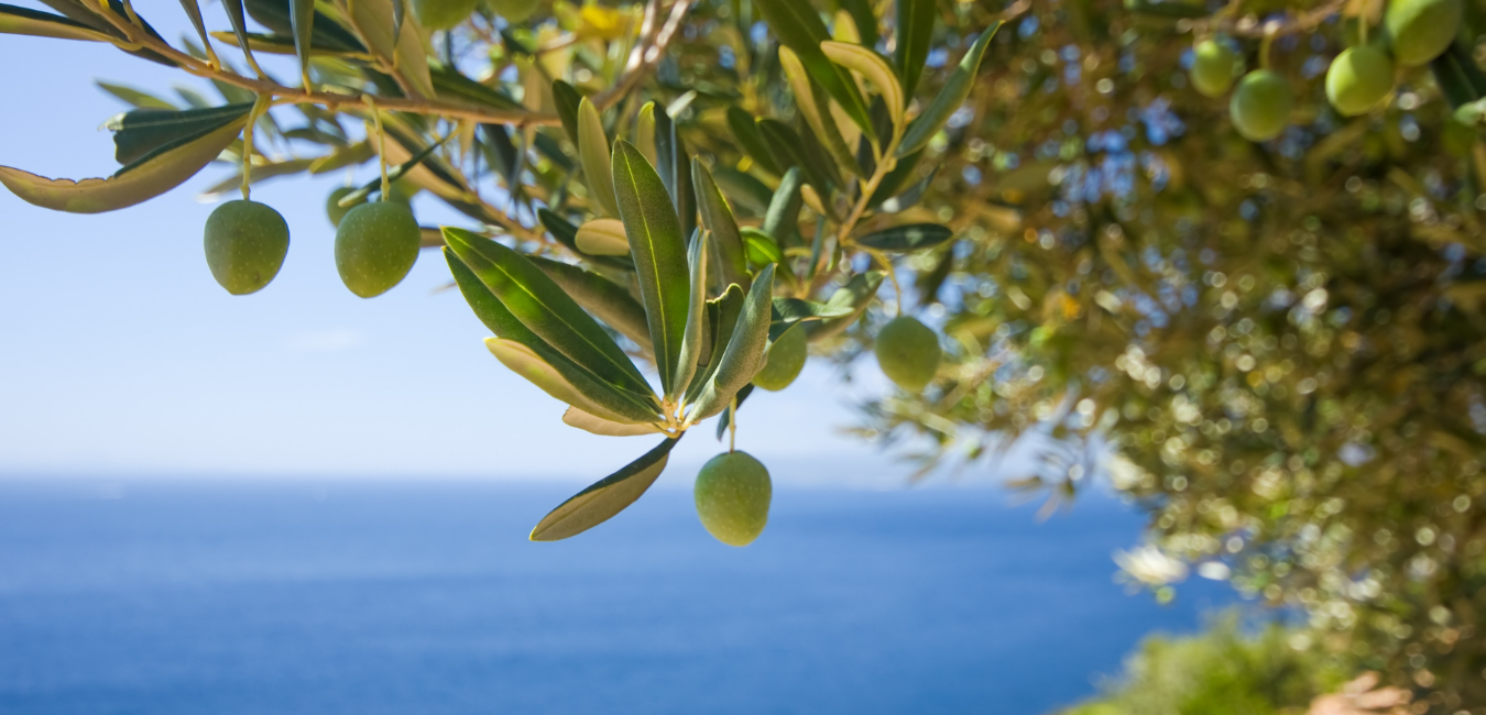 Vinesation Olive Oils & Vinegars