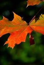 Vermont Maple Dark Balsamic