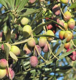 Chiquitita EVOO Olive Oil  IOO566 (Mild)