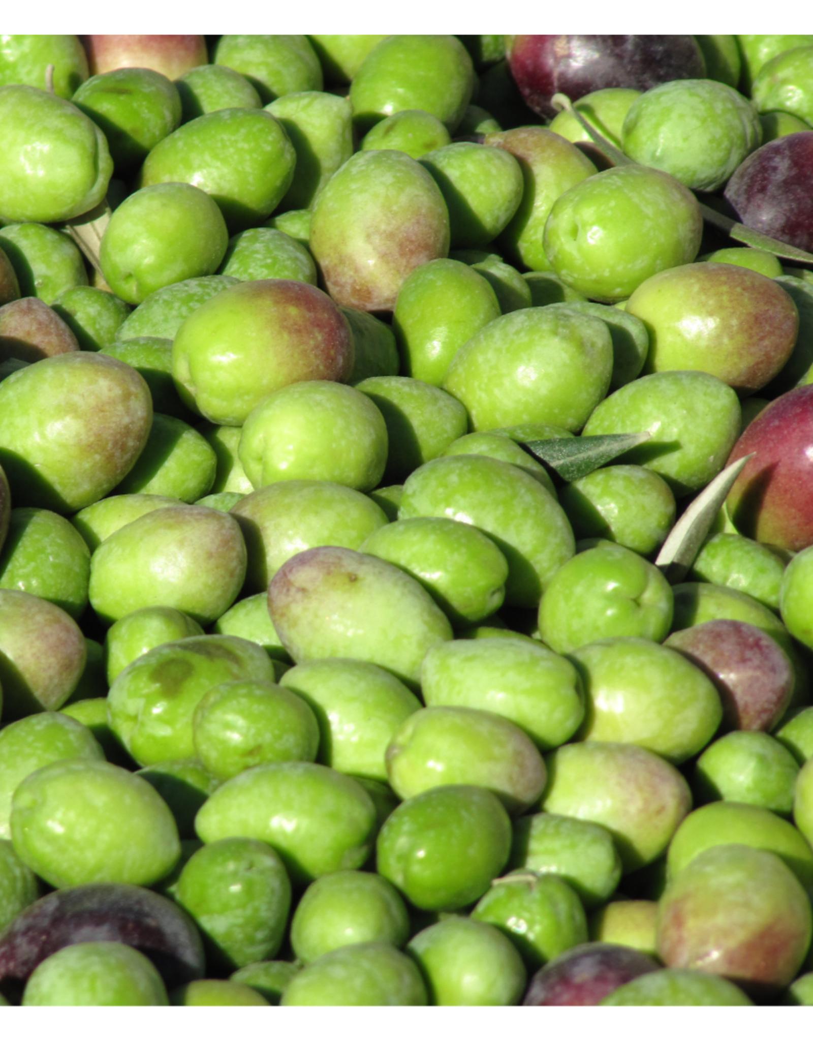 Chetoui Organic EVOO IOG561 (Robust)
