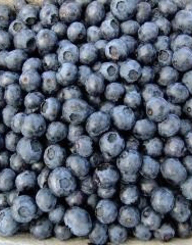 Wild Blueberry Balsamic