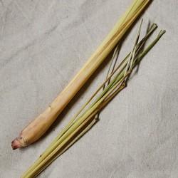 Vitruvi Organic Lemongrass Essential Oil
