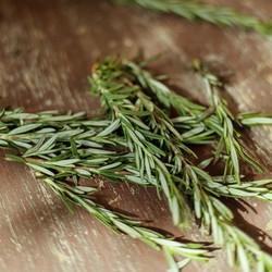 Vitruvi Organic Rosemary Essential Oil