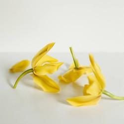 Vitruvi Ylang Ylang Essential Oil