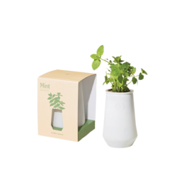 Modern Sprout White Tapered Tumbler - Mint