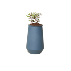 Modern Sprout Blue Agave Tapered Tumbler - Eucalyptus