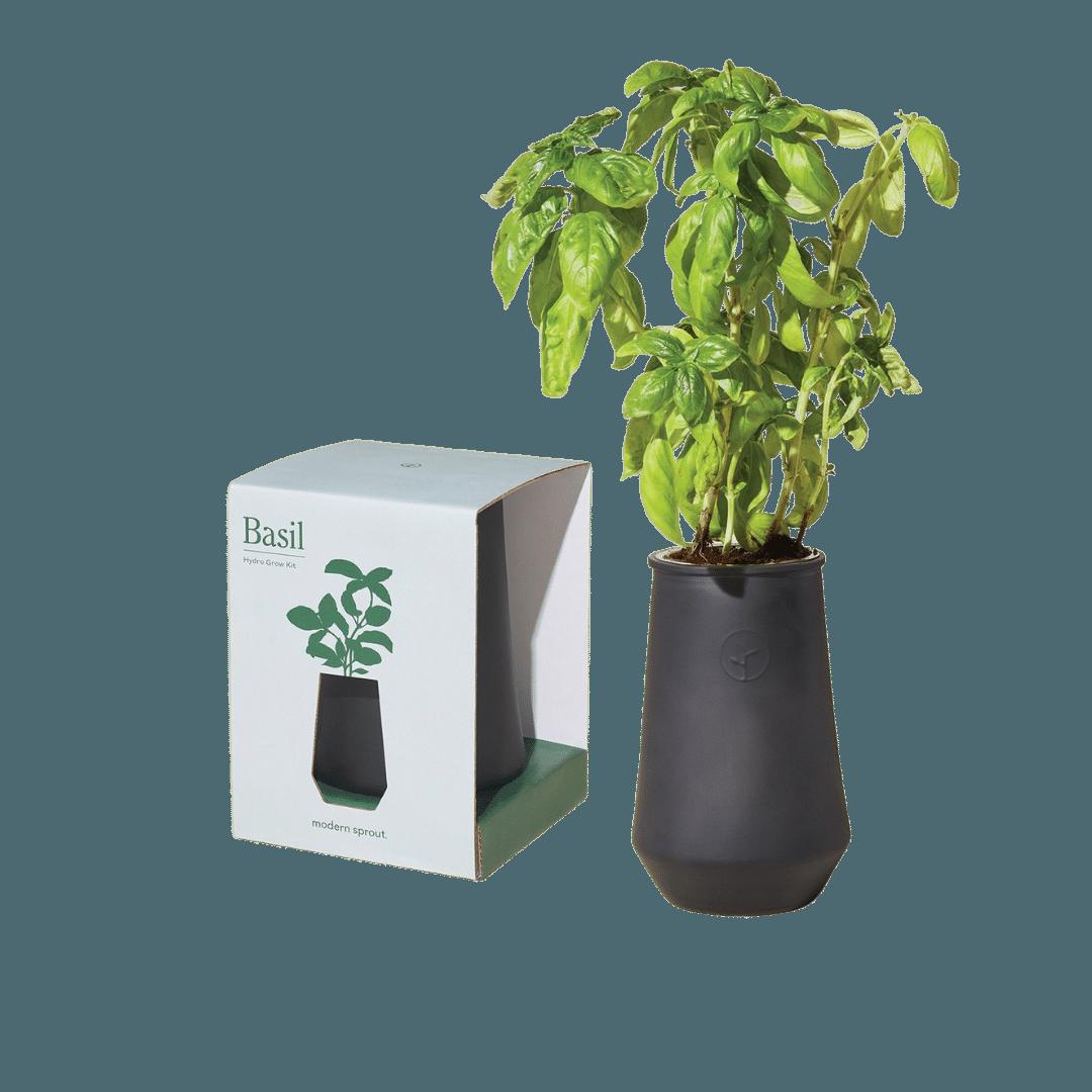 Modern Sprout Black Tapered Tumbler - Basil