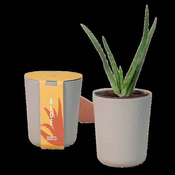 Modern Sprout Bamboo Grow Kit Aloe