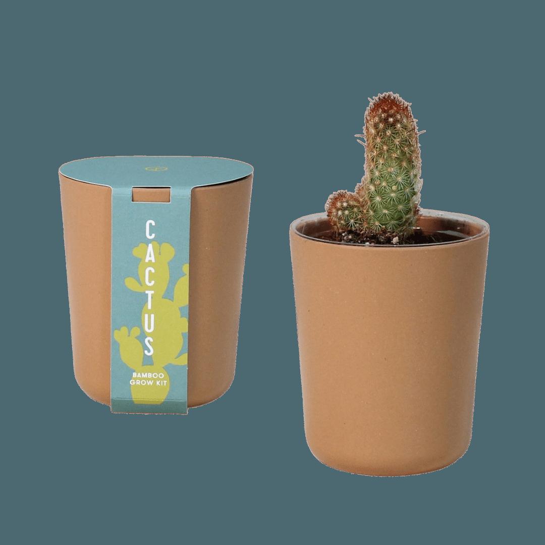 Modern Sprout Bamboo Grow Kit Cactus