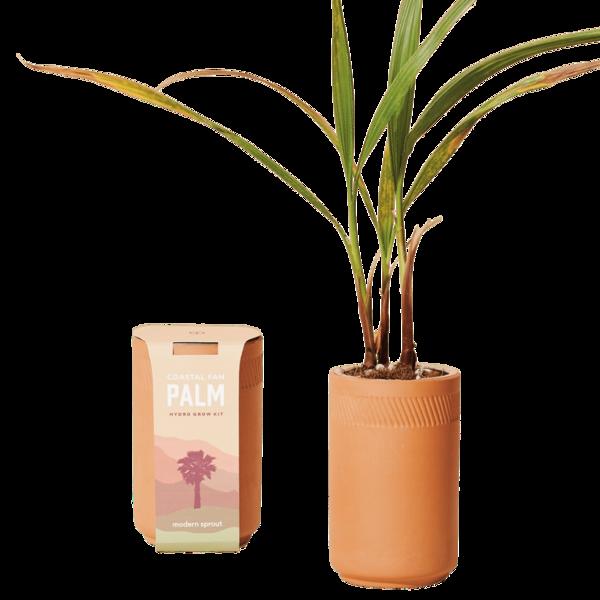 Modern Sprout Terracotta Kit Coastal Fan Palm