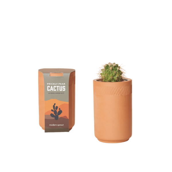 Modern Sprout Terracotta Kit Prickly Pear Cactus