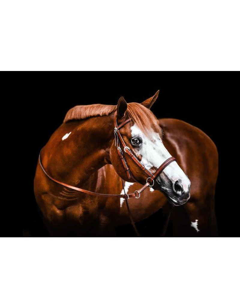 Dr. Cook's Bitless Bridle Western