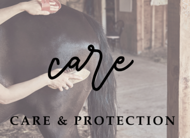 Care and Protection