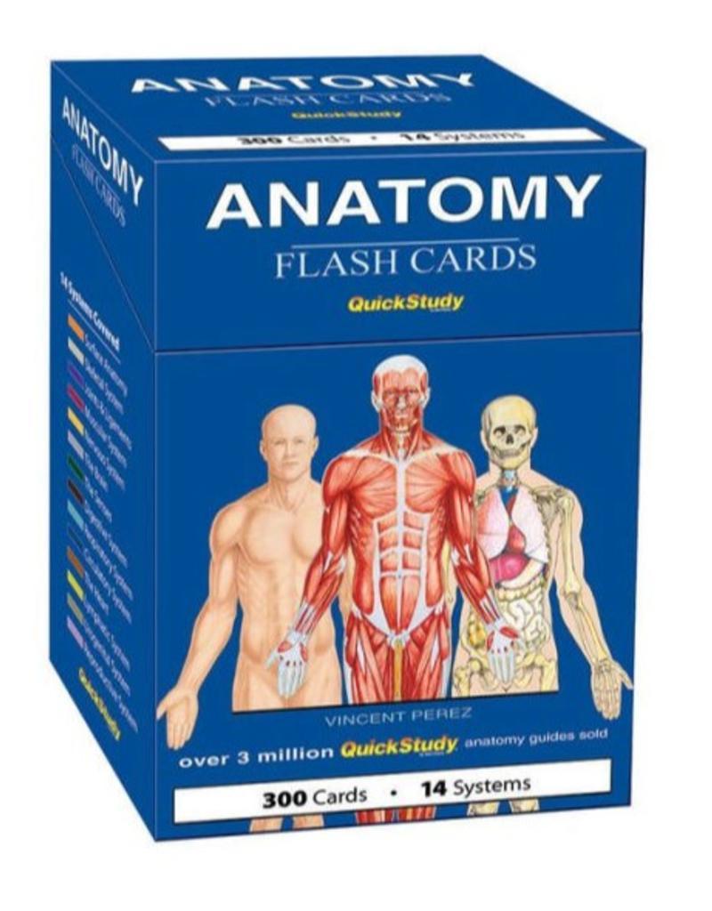 Deck Anatomy Flash Cards Asheville Yoga Center