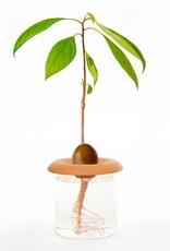 Kikkerland Terracotta Seed Sprouter