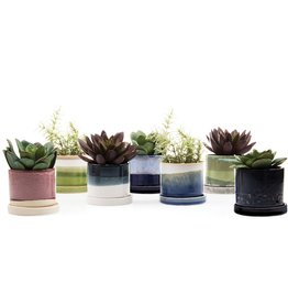 Chive Minute Pot and Saucer (sm)