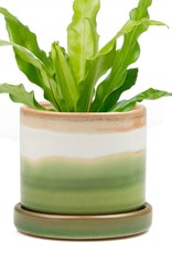 Chive Big Minute Planter and saucer (lg)
