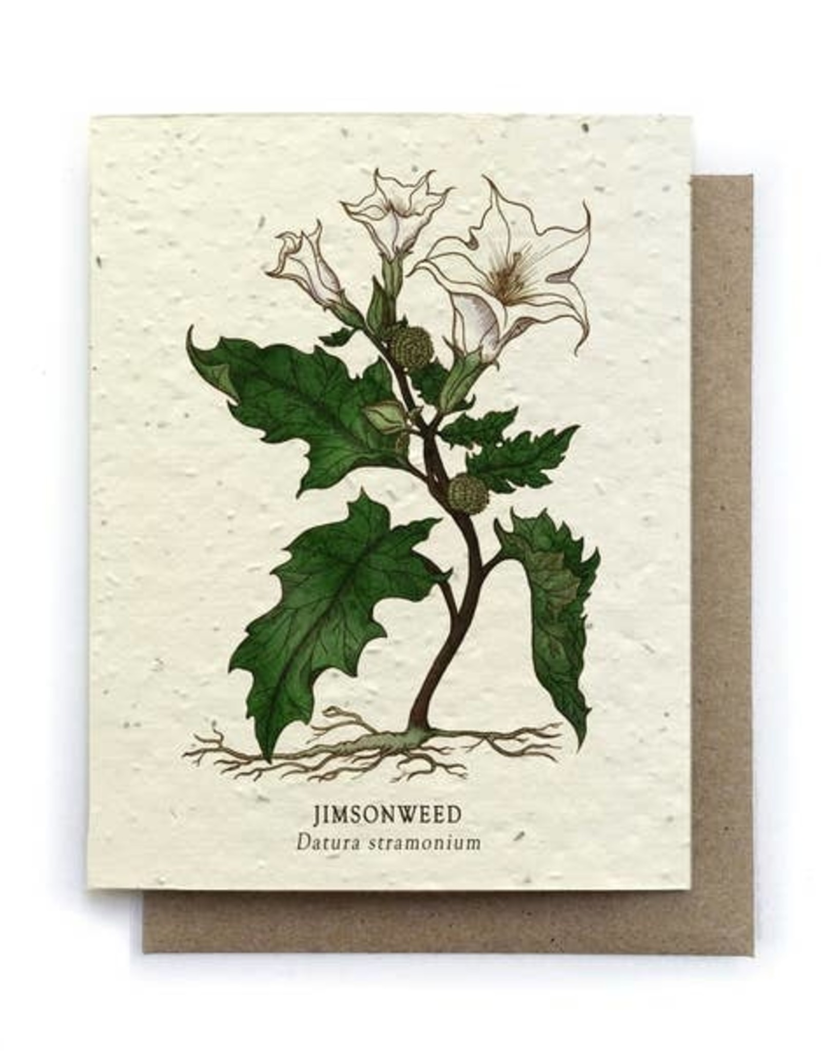 LeBLANC finds Jimson Weed Botanical Greeting Cards - Plantable Seed Paper