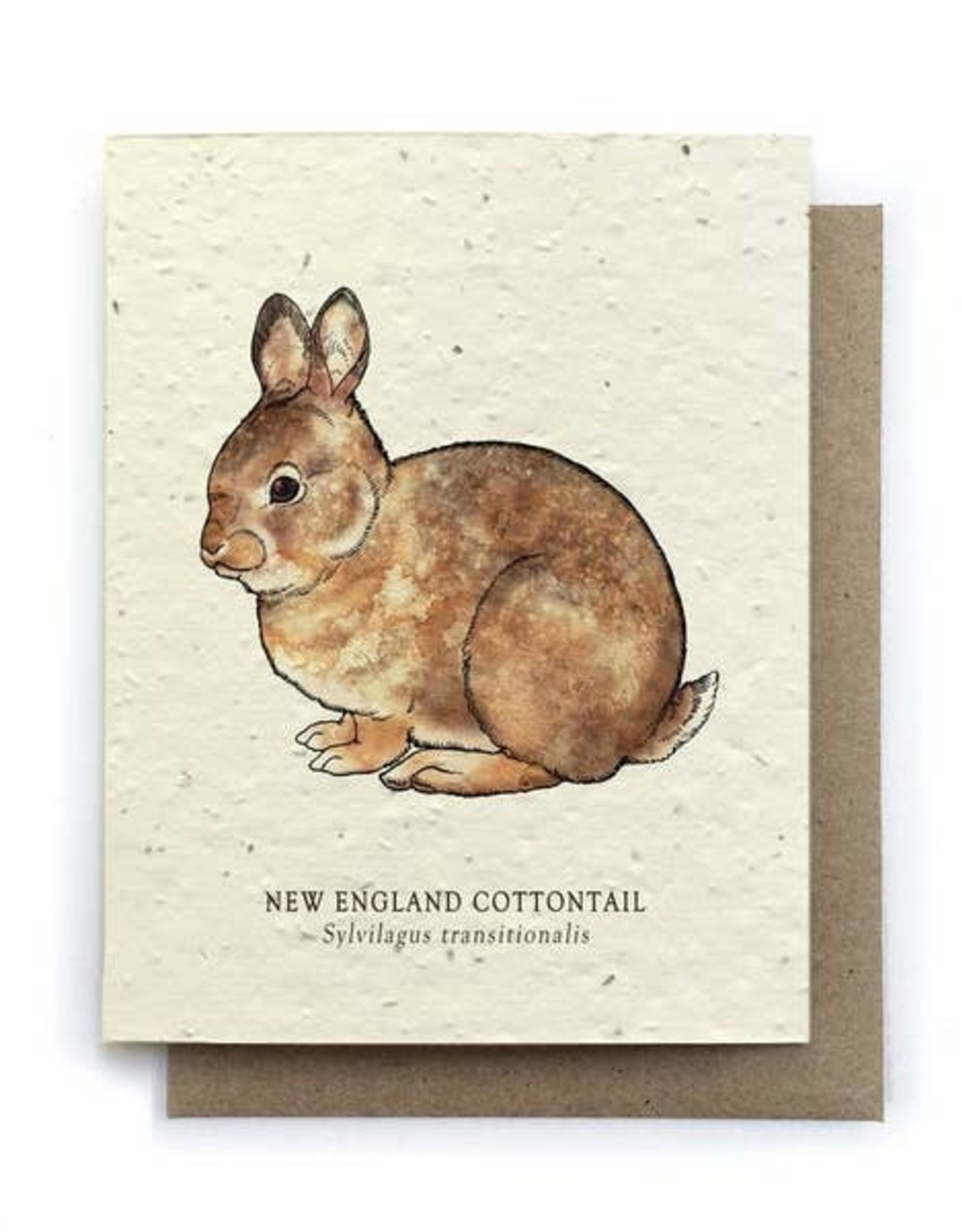 LeBLANC finds Cottontail Rabbit Greeting Cards - Plantable Seed Paper