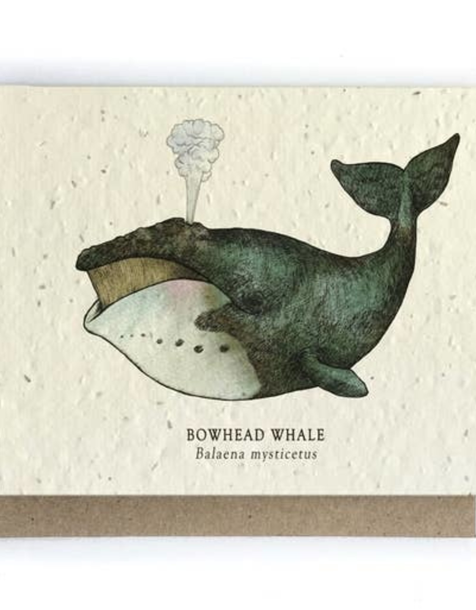 LeBLANC finds Whale Ocean Greeting Cards - Plantable Seed Paper