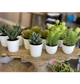The Ritzy Gypsy SUCCULENTS in mini containers