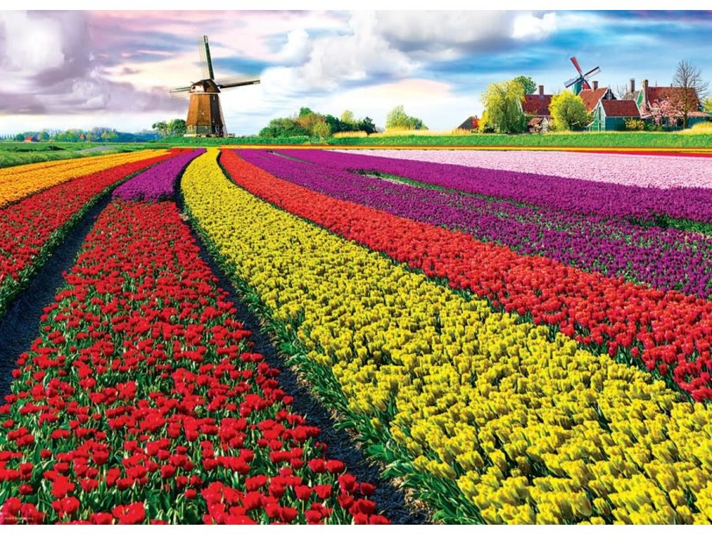 Games Puzzle Tulip Fields 1000 Pcs