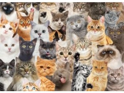 Games Puzzle - All the Cats 1000 pc 28in x 20in