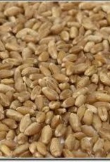 UNMALTED WHITE WHEAT- 1lb.