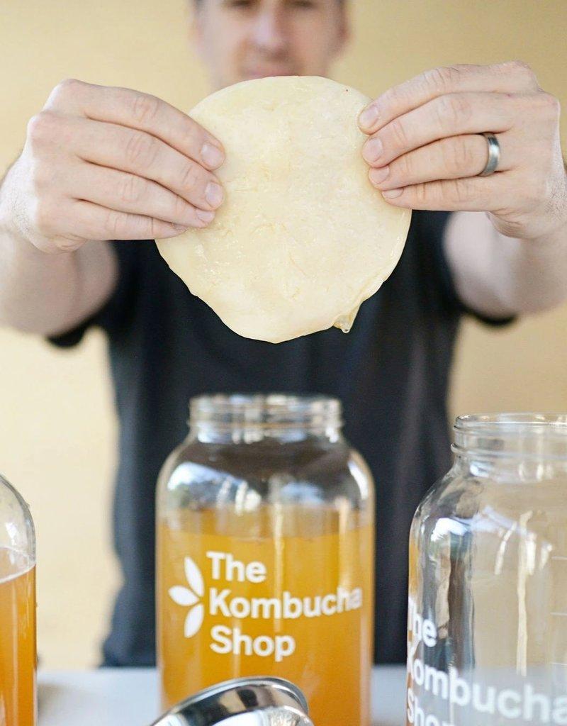Kombucha Culture & Starter