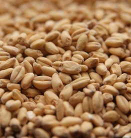 MALTED WHITE WHEAT- 1oz