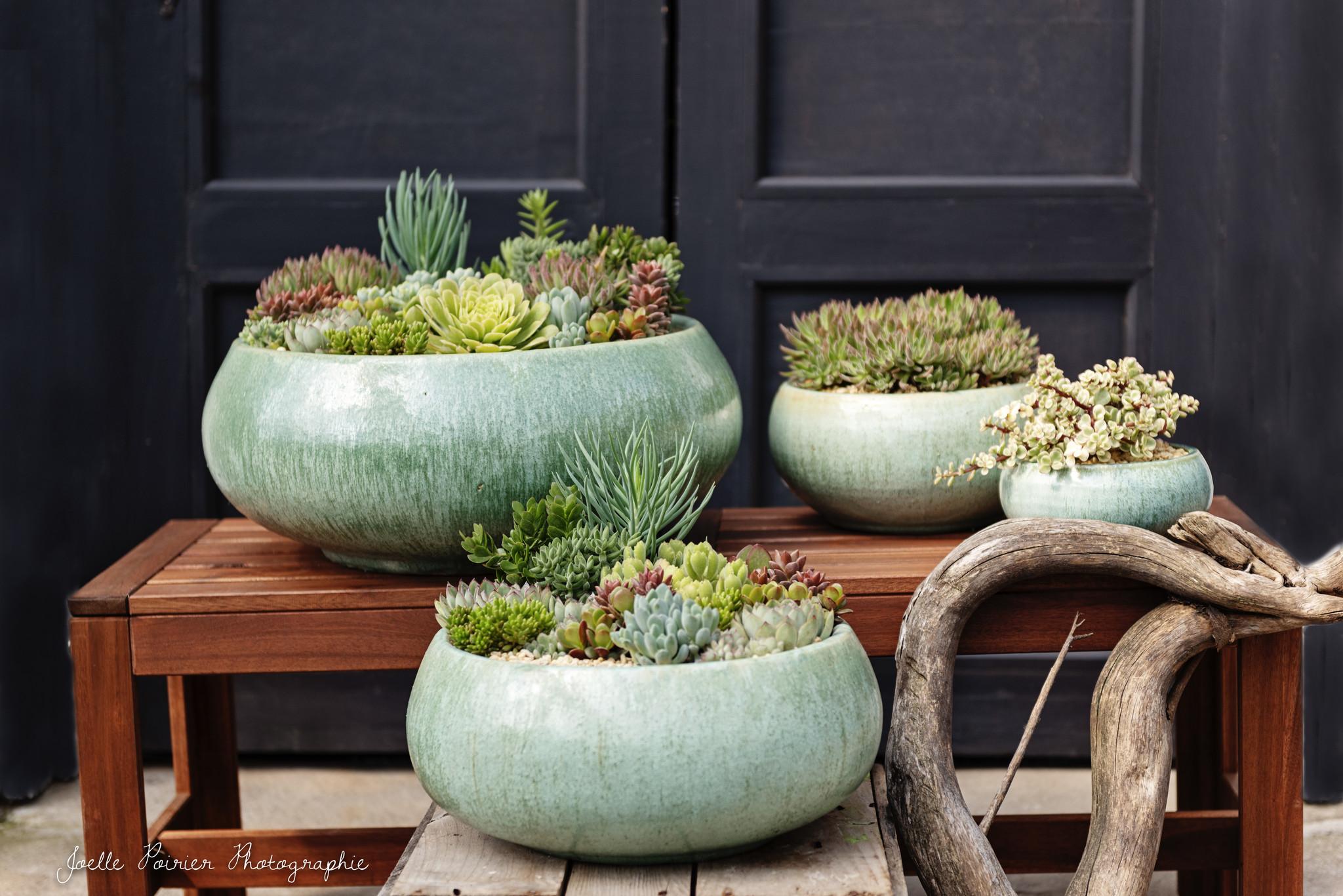 Les succulentes en vedette