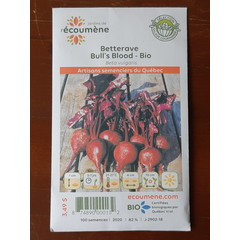 Semences betterave bull's blood bio