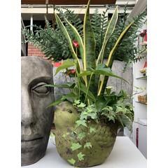 jardin de plantes interieurs-03