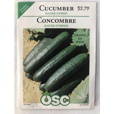 Graines de Concombre (Raider Hybride)