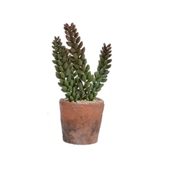 Sedoum artificiel en pot terracotta 3x8''