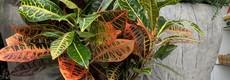 Plantes intérieures