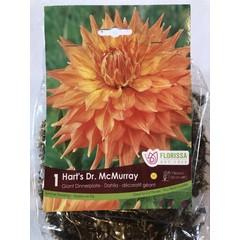 Dahlia Hart's Dr.Mcmurray (unité)