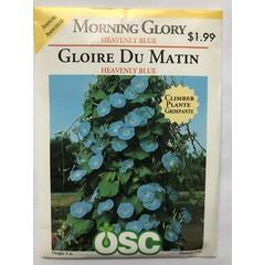 Graines de Gloire du Matin (Heavenly blue)
