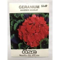 Graines de Géranium (Maverick scarlet)