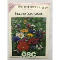 Graines de Fleurs Sauvages (Mélange OSC)
