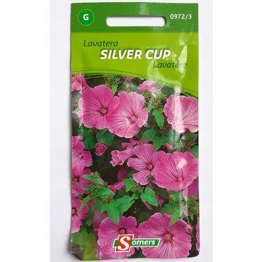 Lavatère Silver Cup G