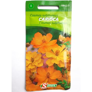 Cosmos sulphureus Carioca I